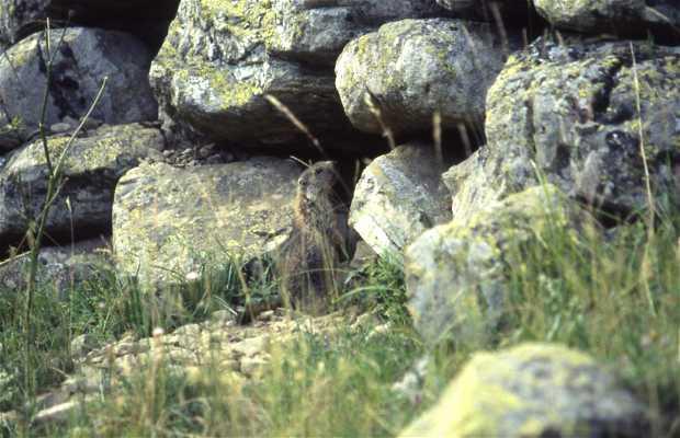 Marmottes de la Bouscarate