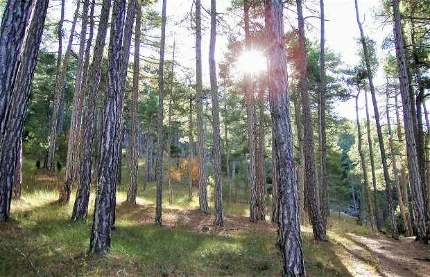 Parque natural Penyagolosa