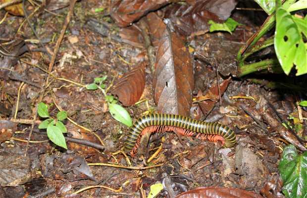 Selva ecuatoriana