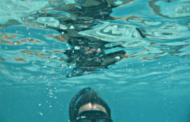 Snorkel en Koh Nang Yuan