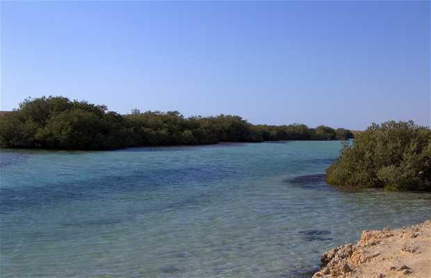 Mangrovie di Ras Mohammed