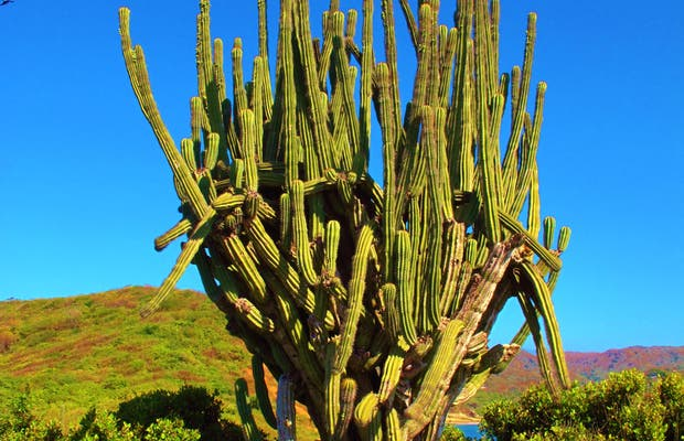 300 años de historia en Punta Cometa.