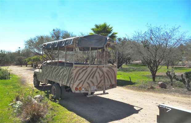 Zoo León