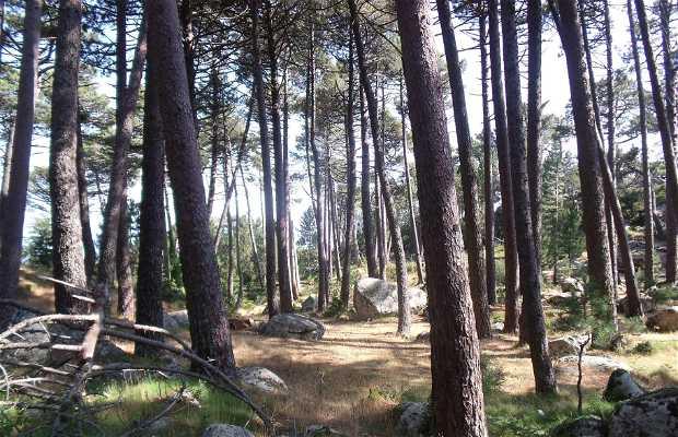 Bosque de L´Ospedale