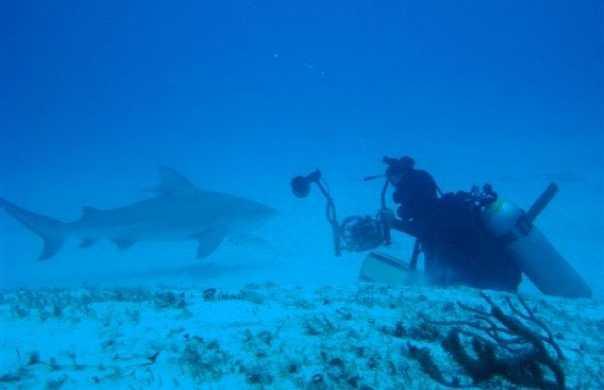 Buceo Tiburón Toro