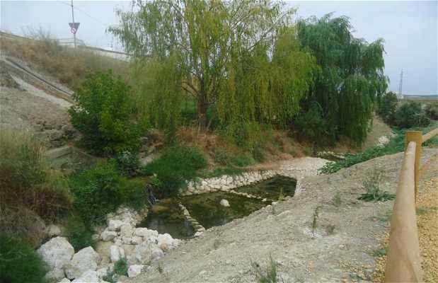 Parque Periurbano Arroyo del Lavadero