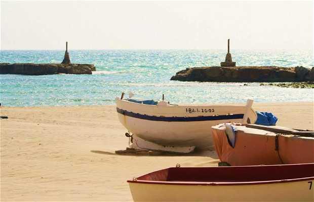 Barcas del Terramar