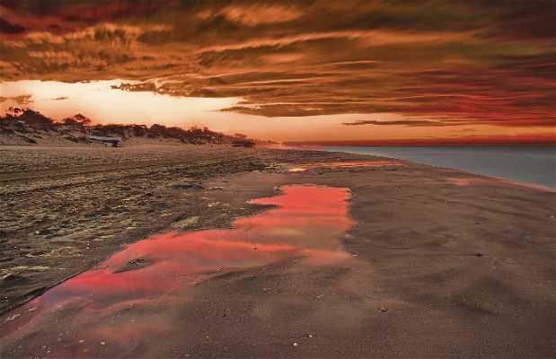 Spiaggia di Elvira a Marbella