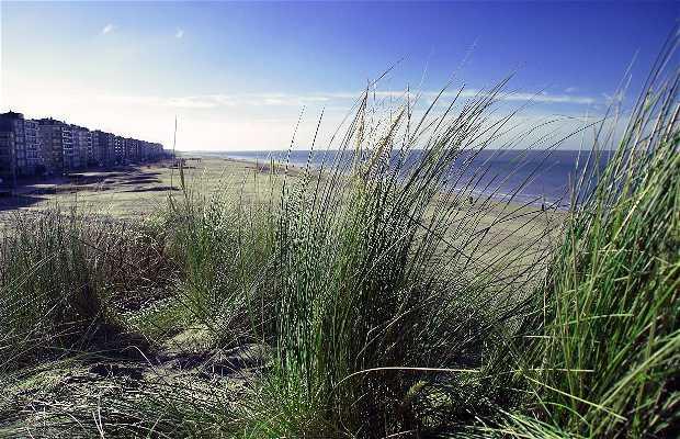 Dunes de la Panne