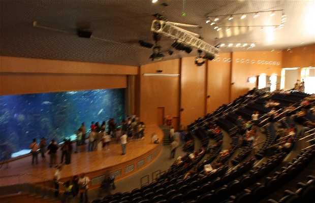 Auditorium - Red Sea