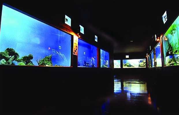 Aquarium Monde Marin