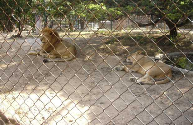 Parque Bararida Zoologico Barquisimeto