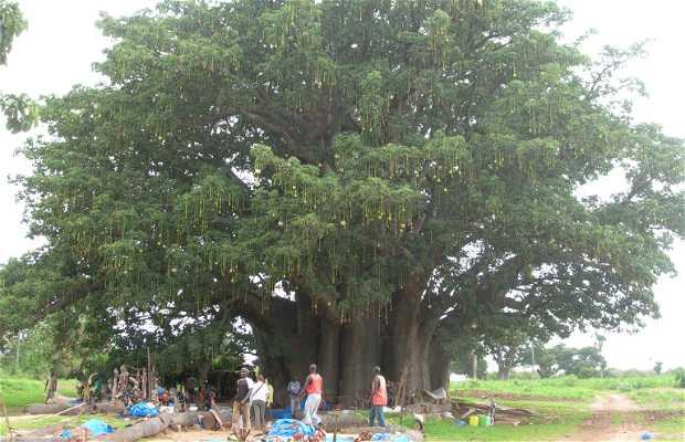 Baobab de Joal