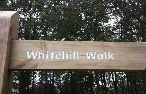 Whitehill walk