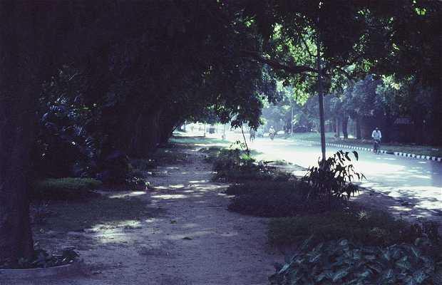 Las Avenidas de Chandigarh
