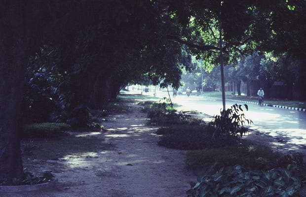 The Avenues of Chandigarh