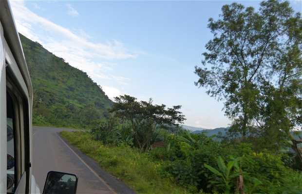 La selva de Jima