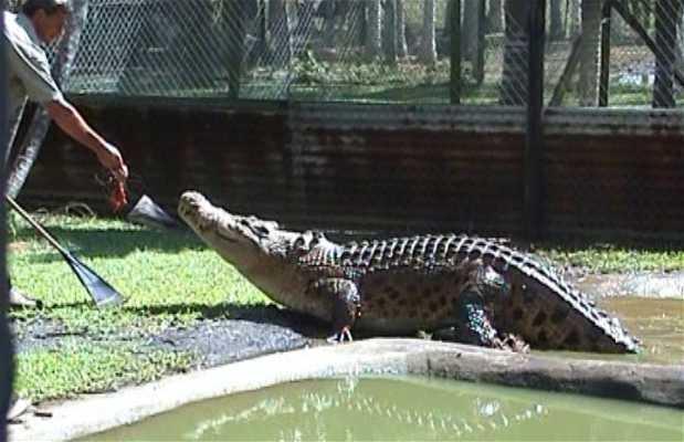 Johnstone river crocodile & Animal Park