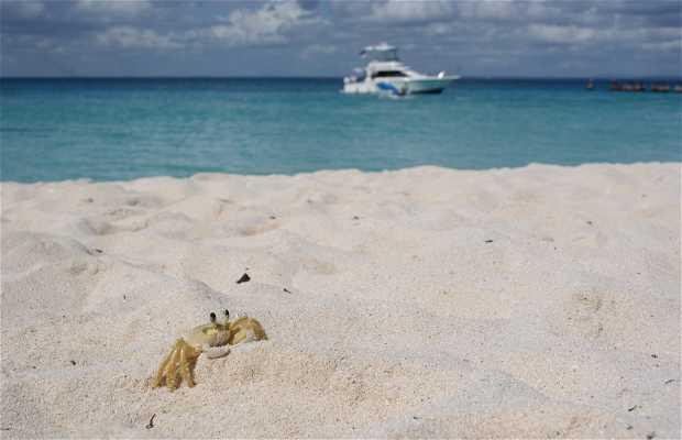 Playa de Saona