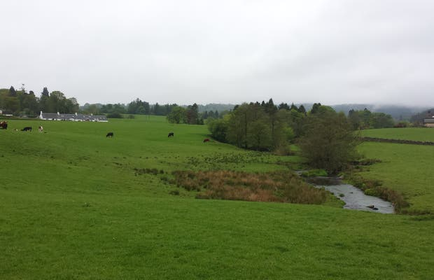 Auld Sauchie fields