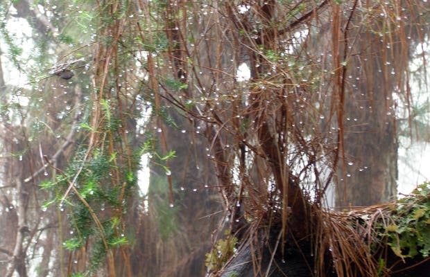 Bosque del Birigollo