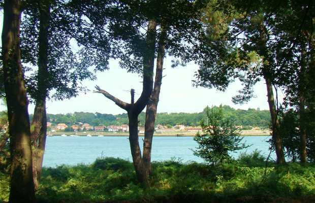 La Forêt du Lazaret