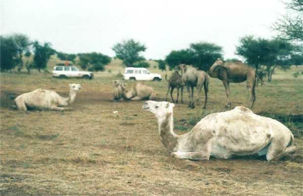 "Campamento "" Tuareg """