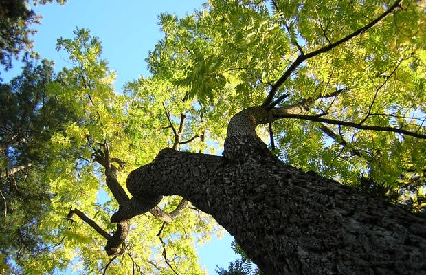 Jardin botanique de tours tours 5 exp riences et 16 photos for Jardin botanique tours