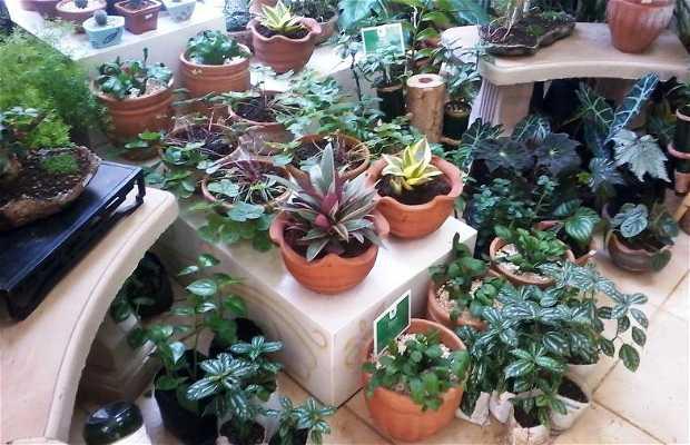 Jardín Oasis Nelva